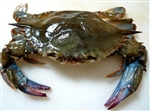 Crab, Soft Shell - $31.87 for 4 Jumbo Crabs