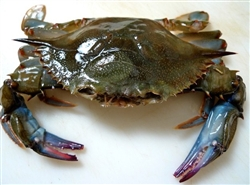 Crab, Soft Shell - $34.87 for 4 Jumbo Crabs