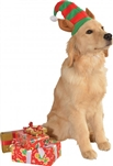 Rubies Elf Pet Hat W/Ears S-M