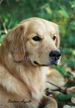 Golden Retriever Garden Flag