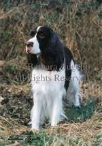 English Springer Spaniel (L/W) Garden Flag