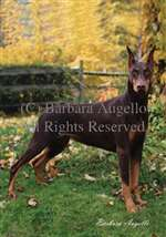 Doberman Pinscher (Red) Garden Flag