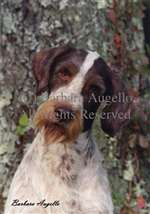 German Wirehair Pointer Garden Flag