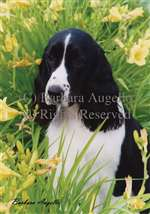 English Springer Spaniel (Black/White) Garden Flag