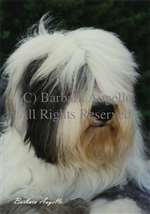 Old English Sheepdog Garden Flag
