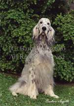 English Setter (Blue) Garden Flag