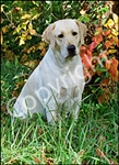 Yellow Lab/Leaves Garden Flag