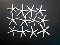 Set of 12 White Finger Starfish 2-3""