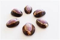 Purple Top Snakehead Cowrie