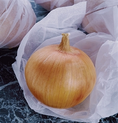 Certified Organic Candy (F1) Onion Transplants