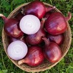 Red-Carpet Organic Cabernet Onion Transplants