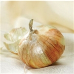 Certified Organic Walla Walla Sweet Onion Transplants