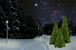 11', 13, 15' and 18' Wide base Mountain Pine tree with LED Bulbs