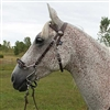 S Hackamore Bridle Combo For Sale!