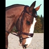 Difference Collection Dressage noseband bridle