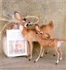 Sarafina Doe and Fawn Supply Pack