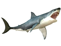 Shark Meat, Buy Shark Meat, Shark Meat price, best shark to eat, where to buy shark meat, shark meat, shark meat for sale, shark meat recipes, is shark meat edible, shark meat nutrition, shark meat taste, how to cook shark meat, where can I buy best shark