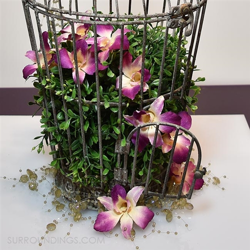 Preserved Orchids