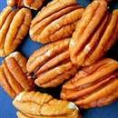 Sumner Pecan Tree