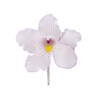 Medium Cymbidium Orchid Blossom - White With Lavender