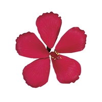 Gum Paste Hibiscus - Red