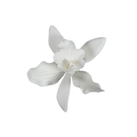 Small Cattleya Orchid - White