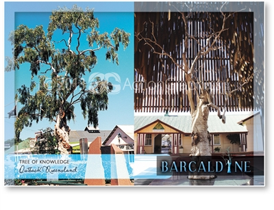 Tree of Knowledge - Standard Postcard  BAR-009