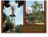 Barcaldine Windmill - DISCOUNTED Standard Postcard  BAR-230