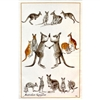KANGAROO 94 Cotton/Linen Tea Towel - C722