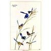 WRENS Cotton/Linen Tea Towel - C727