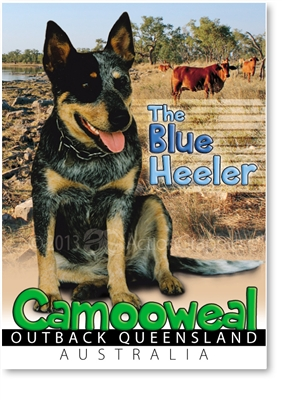 The Blue Heeler - Small Magnets  CAMM-003