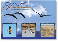 Karumba, Birdlife in the Gulf - Standard Postcard  KAR-001