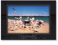 Karumba, Pelicans and Gulls - DISCOUNTED Standard Postcard  KAR-076