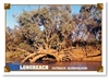 Longreach Outback Qld River Scene - DISCOUNTED Standard Postcard LON-200