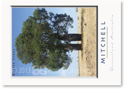 Bottle Tree - Standard Postcard  MIT-440