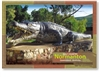 Normanton Gulf Country Krys - Standard Postcard  NOR-069