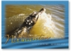 Normanton Norman River Crocodile - DISCOUNTED Standard Postcard  NOR-350