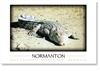 Normanton Crocodile - DISCOUNTED Small Magnets  NORM-171