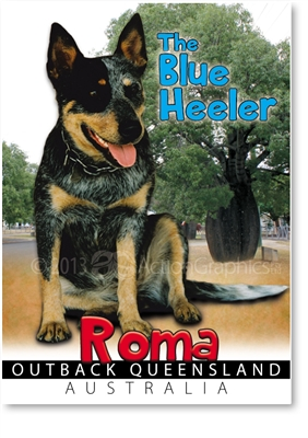 The Blue Heeler - Small Magnets  ROMM-003