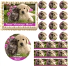 Adorable PUPPY and KITTEN Theme Edible Cake Topper Image Frosting Sheet - All Sizes!