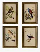 Imax, Wooden Bird Plaques - Set of 4 (16125-4)