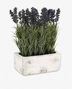 Imax, Potted Lavender (87865)