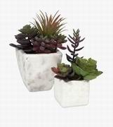 Imax, Wolek Potted Succulents - Set of 2 (87866-2)