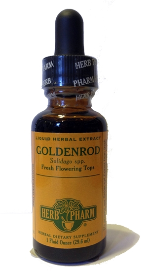 Goldenrod: Dropper Bottle / Organic Alcoholic Extract: 1 Fluid Ounce
