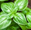Basil, Sweet, Essential Oil: Amber Bottle / Essential Oil: 10 mL