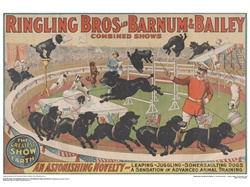 Ringling Somersault Dogs Poster