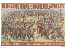 Ringling 5 Herd Performance Elephants Poster
