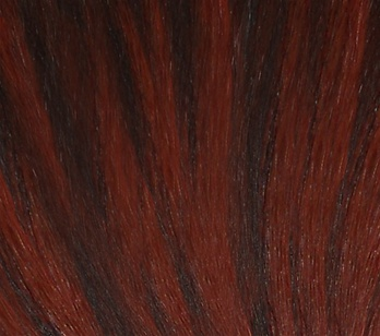 Hair Extension Sample Darkest Brown- Bright Red Copper MIX