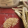 Maris Widgeon Wheat