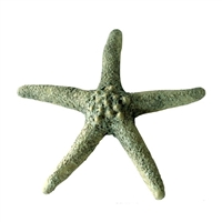 Starfish Ceramic Small - Moss Green..
